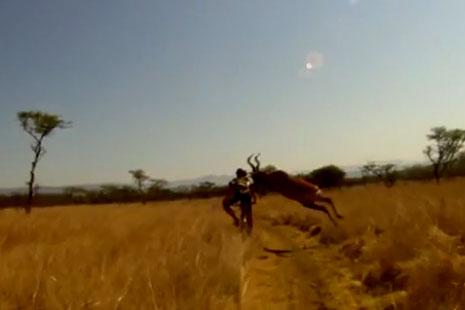 bajker-vs-antilopa